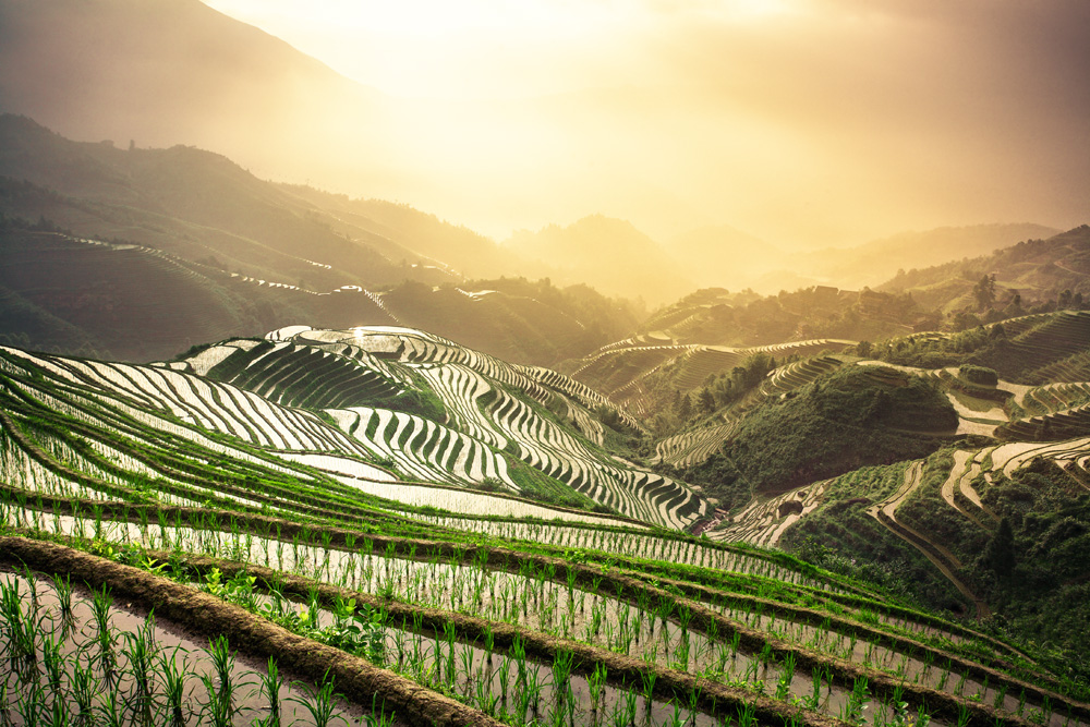 Rice Terraces III
