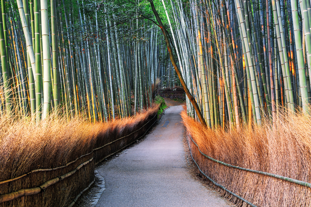 sunrise in the bamboo forest kyoto
