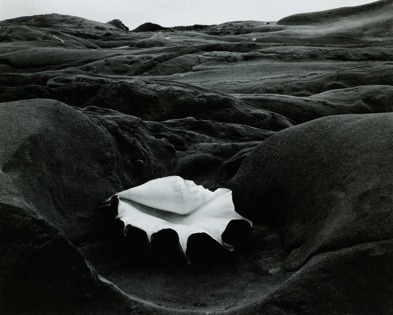 By abstract nature photographer Edward Weston
