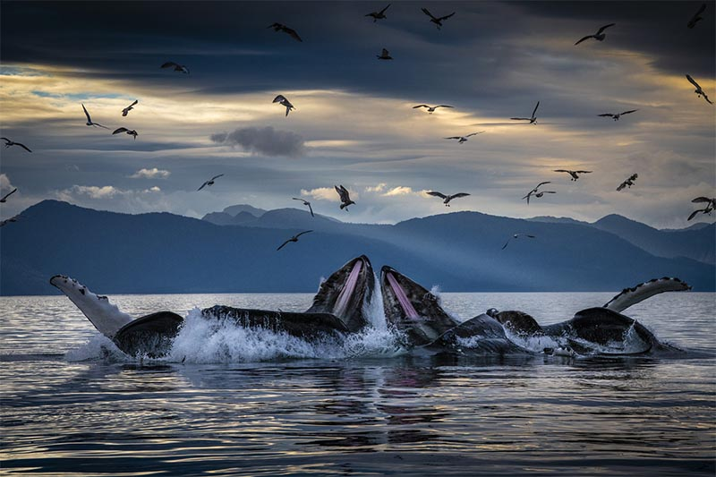 Brian Skerry whale photography
